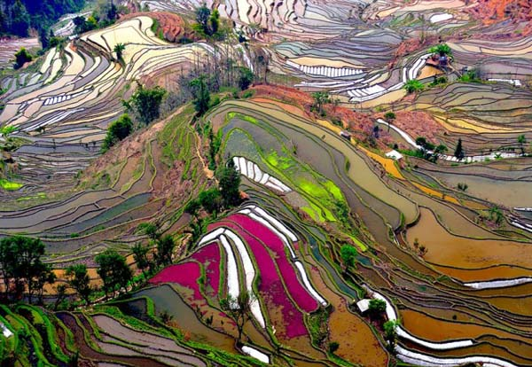 27-Terrace-Rice-Fields-China