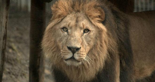 zoo leoni