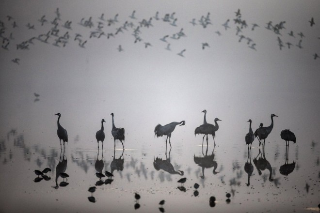11. a-flock-of-migrating-cranes-seen-at-the-hula-lake-ornithology-and-nature-park-in-northern-israel