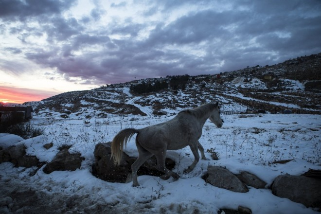 13. a-horse-walks-in-the-snow-at-the-base-of-mount-hermon-in-the-golan-heights-near-the-israel-syria-border