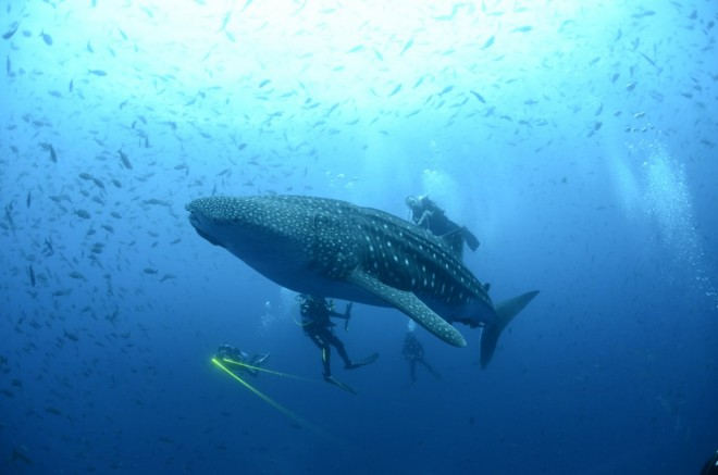 20. a-whale-shark-is-seen-in-the-galapagos-islands
