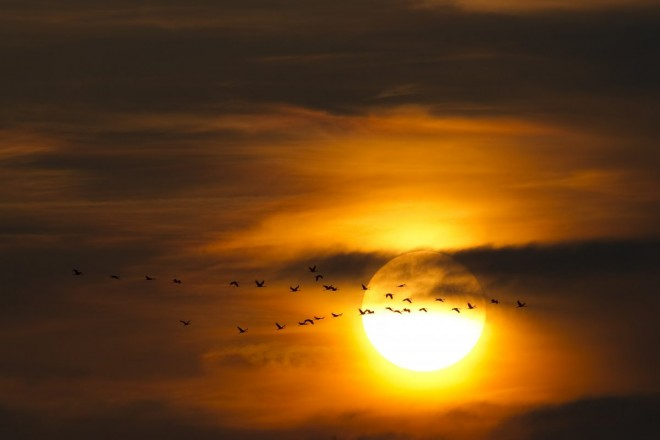 migrating-common-cranes-fly-to-their-night-roost-at-sunset-north-of-berlin