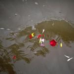 I Fiori che galleggiano sulla superficie del Fiume Azzurro in seguito alla cerimonia funebre.