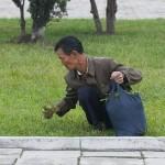 Un'immagine consueta nella vita quotidiana di Pyongyang: i residenti che raccolgono l'erba nei parchi per poi mangiarla.