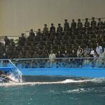 """Il """"Delphinium"""" di Pyongyang, dove il 99% dei partecipanti allo spettacolo sono soldati."""