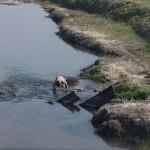 Un'immagine comune nelle aree rurali più remore della Nord Corea: il bagno nel fiume.