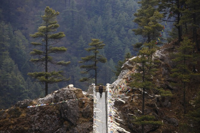 A porter crosses a bridge while on his way back from Namche in Solukhumbu District