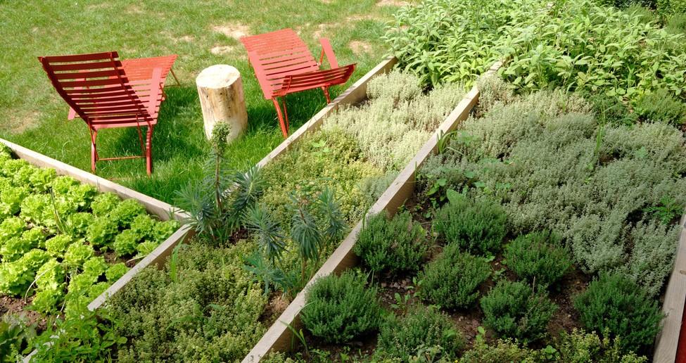 Orto erba brusca