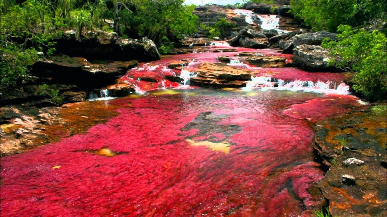 rio caño de cristales fenomeni incredibili
