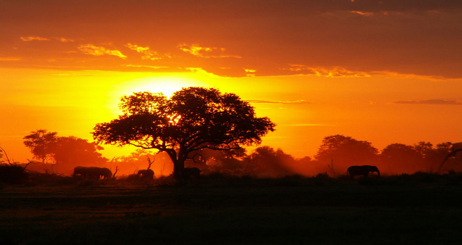 imperdibili parchi africani