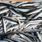 Sono inclusi salmone, trota, sardine, sgombro, aringhe, acciughe e tonno fresco. Il consiglio è quello di assumere pesce azzurro tre volte a settimana, meglio se fresco. Gli omega-3 presentano un'alta concentrazione di acido docosaesaenoico (DHA), un acido grasso cruciale per mantenere il sistema nervoso in salute. E' stato dimostrato che bassi livelli di DHA possono aumentare il rischio di perdita della memoria. Il pesce azzurro, infine, contiene iodio, utile per migliorare la lucidità mentale.