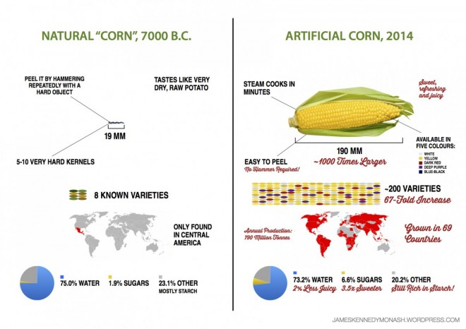 Quanto E' Cambiata la Frutta da Quando l'Uomo Ha Cominciato a Coltivarla?.2