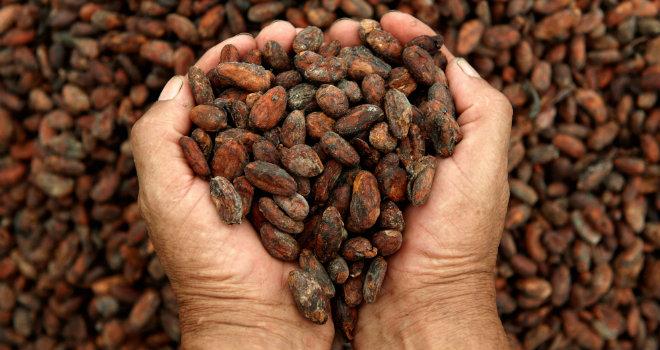 cacao semi cocoa chocolate cioccolato