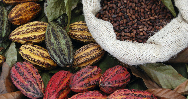 fave cacao semi