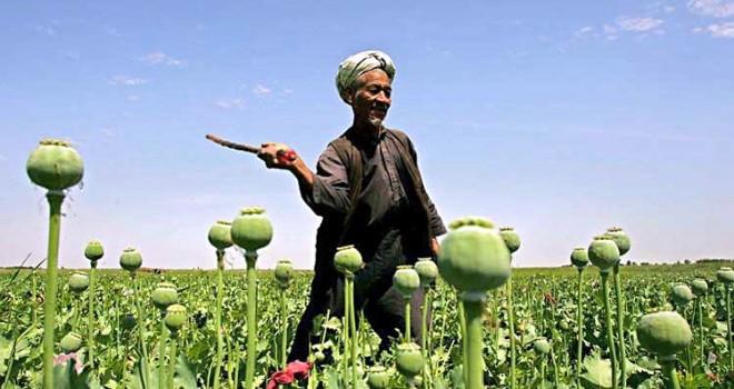 Le Piantagioni di Oppio e il Business Afghano