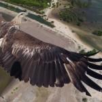 1) Un'aquila che vola sul Bali Barat National Park (Indonesia)