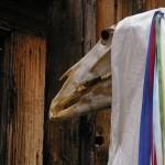 In Galles un protagonista assoluto del periodo natalizio è il Mari Lwyd. Una maschera costituita principalmente da un teschio di cavallo, agghindato con nastrini colorati e fissato ad un robusto palo. L'apparenza non proprio piacente può trarre in inganno, in realtà Mari Lwyd è segno di buon auspicio per l'anno nuovo.