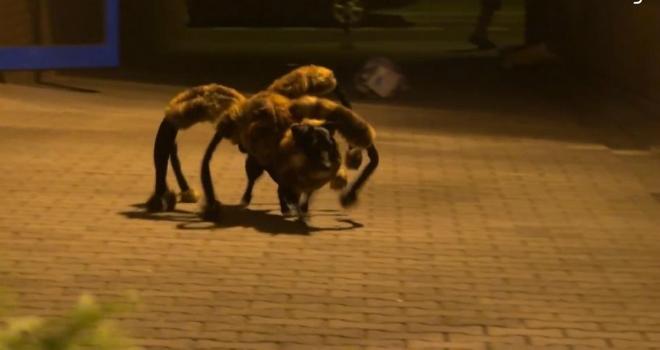 spiderdog video