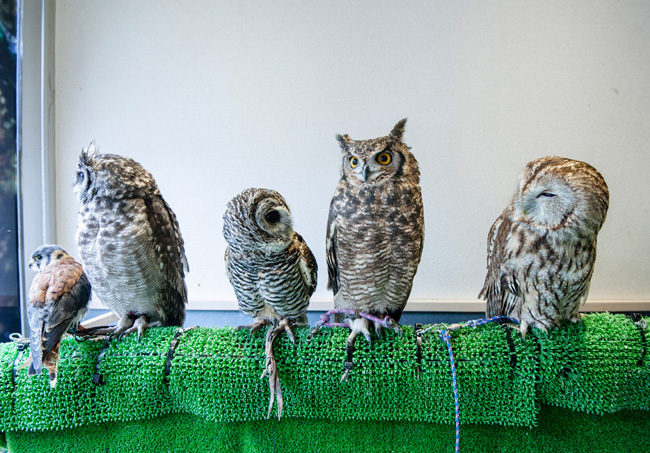 owl--z