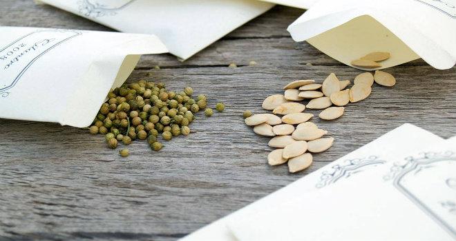 seed savers 1