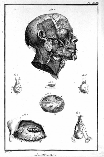 L0018910 Arteries of the face, Diderot's Encyclopedie