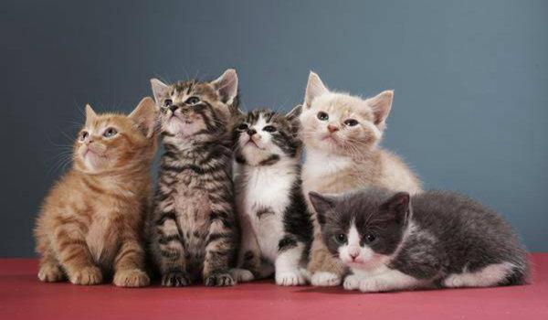 progetto kitten copertina