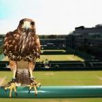 Dall'inizio della competizione sorvola in campi di Wimbledon con il compito di tenere lontani i piccioni dai campi di gioco. Il suo nome è Rufus ed è uno dei protagonisti del celebre torneo londinese. La sua celebrità è nota a tutti anche grazie ai saluti che spesso alcune celebrità gli anno dedicato. Tra tutti la duchessa di Cornovaglia.
