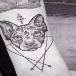 Gatti (meglio se Sphynx)