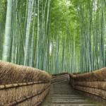 Foresta di bambù di Arashimaya Sagano