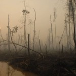 L foschia copre la foresta pluviale nella provincia di Kalimantan il 3 ottobre 2007.