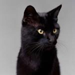 Secondo Guinness World Records , il più ricco gatto del mondo è stato Blackie , che ha ereditato una proprietà del valore 13 milioni di dollari quando il suo proprietario, un antiquario inglese di nome Ben Rea , morì nel 1988.