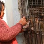 Quando fu comprato da una coppia di coniugi indiani nel 2005, il macaco dalla coda lunga Chunmun fu pagato l'equivalente di 8 dollari. Da allora gli affari per la coppia sono andati a gonfie vele, tanto da far ritenere Chunmun il responsabile delle loro fortuna. E infatti la scimmia viene trattata meglio di un figlio: gli cucinano piatti solo per lui e gli hanno organizzato persino un matrimonio. E' già stato inserito nel testamento della coppia come loro unico erede.