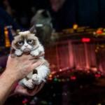 Conosciuta su Internet con il soprannome Grumpy Cat (letteralmente, Gatto imbronciato), è una gatta e un fenomeno di Internet, nota per la sua particolare espressione facciale. Il suo valore è stato stimato a 1 milione di dollari e anche a 100 milioni. La padrona dice che quest'ultima cifra è un'esagerazione , ma non è chiaro di quanto.