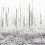 Parco Nazionale di Yellowstone, foto di Jeff Vanuga