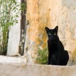 """Un'altro gatto dal ricchissimo portafoglio, Tommaso era un randagio trovato a Roma e preso con sè da un'anziana donna italiana di nome Maria Assunta. Questa ha lasciato una fortuna pari a 13 milioni di dollari al gatto quando morì nel 2011. """" Le ho promesso che mi sarei occupata del gatto"""", ha spiegato l'ex infermiera di Assunta, che ha detto che non aveva idea di quanto fosse ricca la donna. """"Voleva essere sicura che Tommaso sarebbe stato amato e coccolato."""" Una tale somma di denaro può comprare un sacco di coccole, questo è sicuro!"""