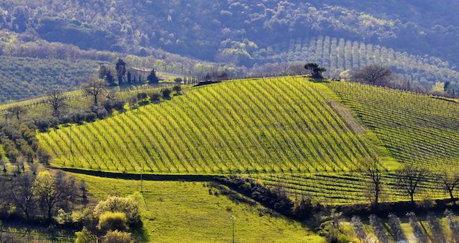 colline-nel-Chianti