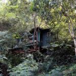 Immersa tra gli alberi sopra la città di Haleiwa, questa casa di 250 piedi quadrati costa circa $ 215 per una notte.