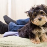 Tenere il cane libero per casa