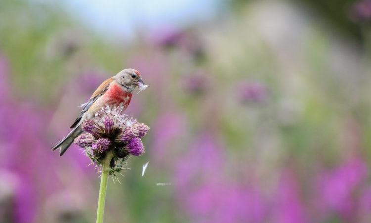 isaac-aylward_wildlife-photographer-of-the-year-750x450