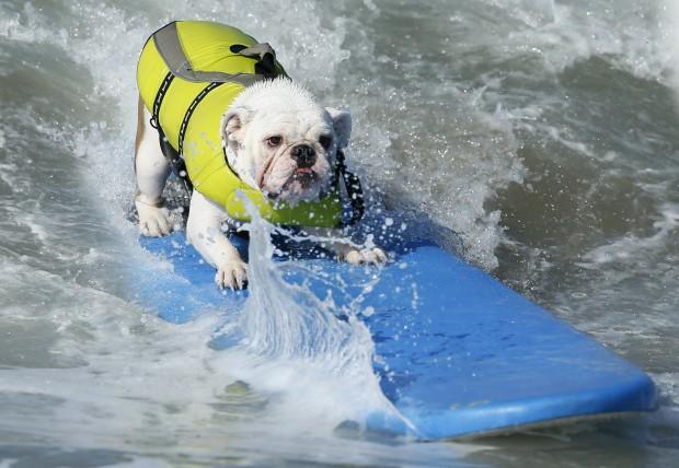 cane e surf
