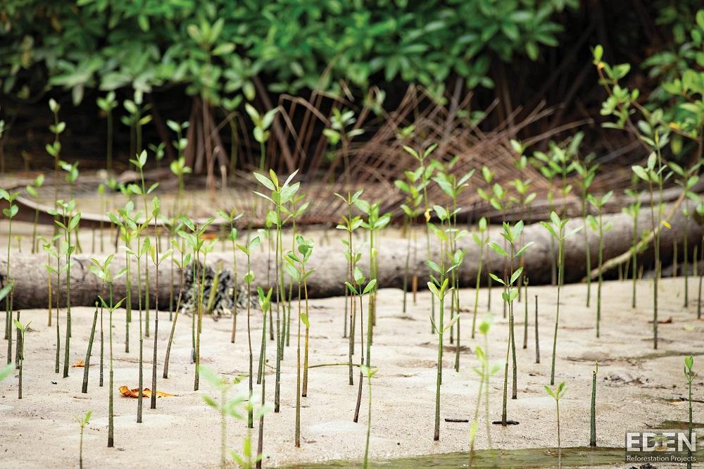 Indo Mangroves_W
